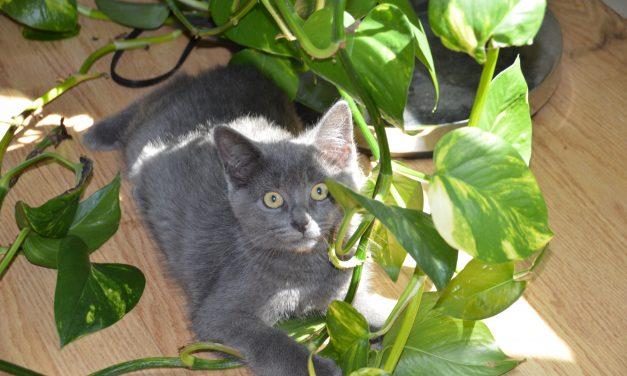 Répulsif naturel pour les chats (Pour sauver vos meubles)