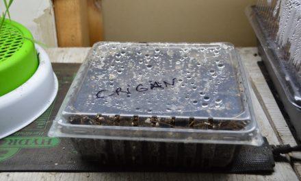 Recycler pour démarrer ses semis facilement