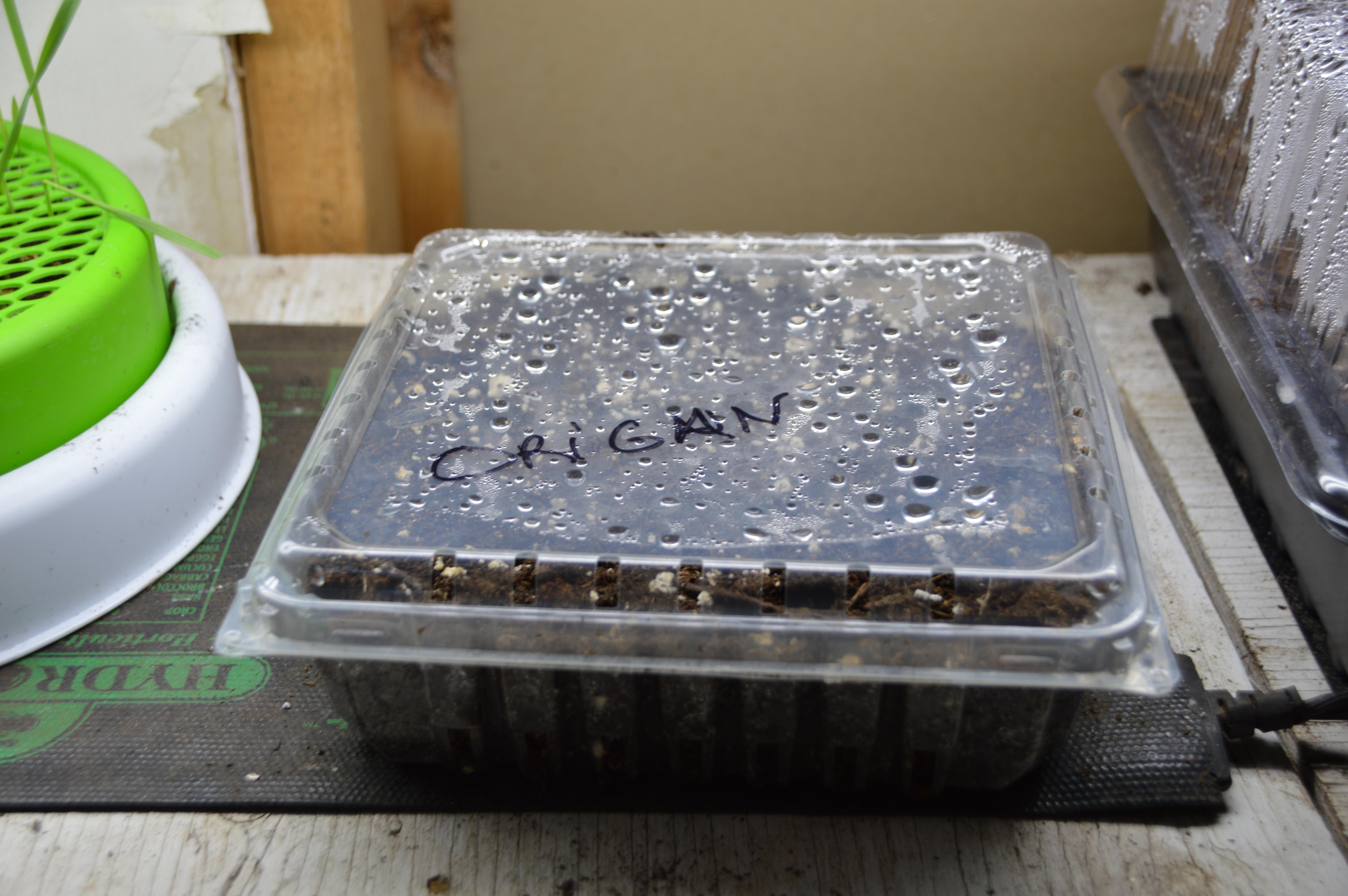 Les meilleurs trucs pour recycler et démarrer ses semis facilement!