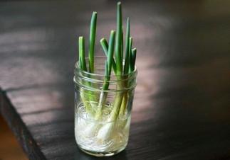 10 légumes qu'on peut faire repousser facilement dans l'eau