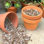 Fabriquer une terre à plantes grasses (cactus, etc)