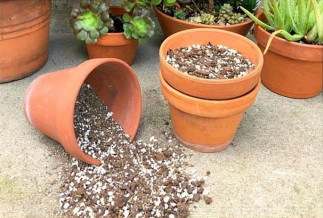 Fabriquer un sol à plantes grasses (cactus, etc)