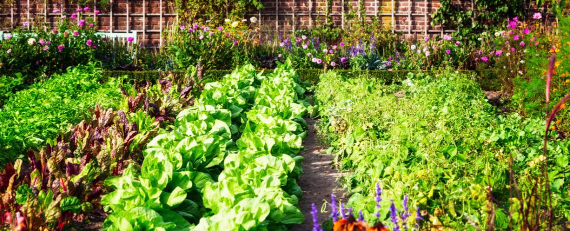 Organisez votre jardin pour vous assurer d'avoir la meilleure récolte!