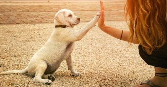 7 trucs essentiels à savoir pour les propriétaires de chien