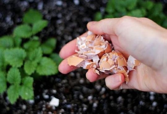 6 utilisations surprenantes des coquilles d'oeuf dans votre jardin!