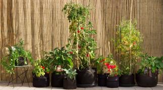 18 légumes qui poussent facilement en pot si vous manquez d'espace!