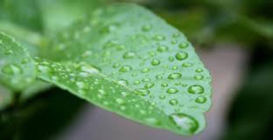 Ces 5 plantes aideront à absorbent l'humidité de votre maison!