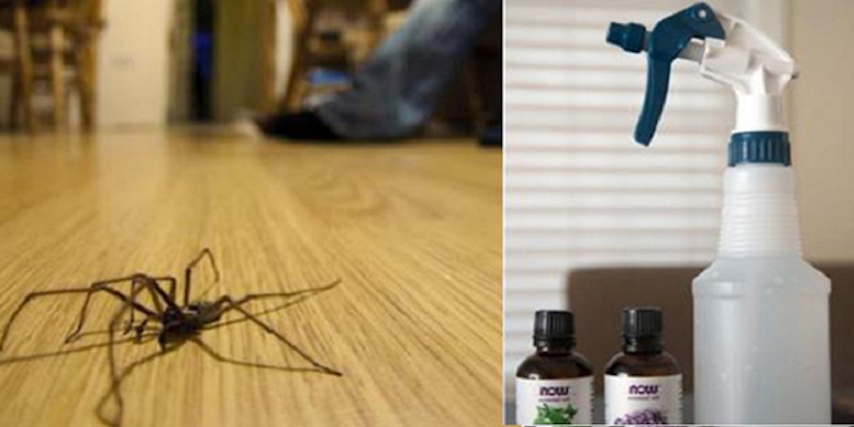 Truc facile et naturel pour se débarrasser des araignées!