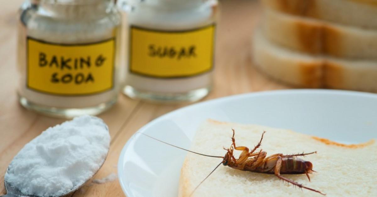 Truc infaillible pour se débarrasser des fourmis : le bicarbonate de soude!