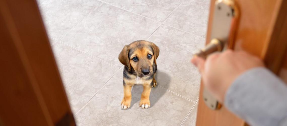 Apprenez à votre chien à rester seul en 3 étapes faciles
