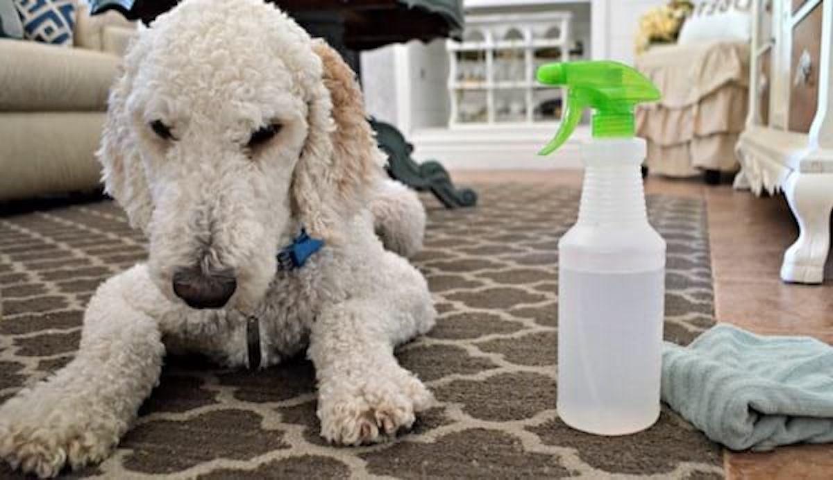 4 utilisations surprenantes du vinaigre lorsqu'on a des animaux!