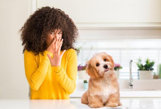 Ce désodorisant naturel éliminera les odeurs d'animaux dans votre maison