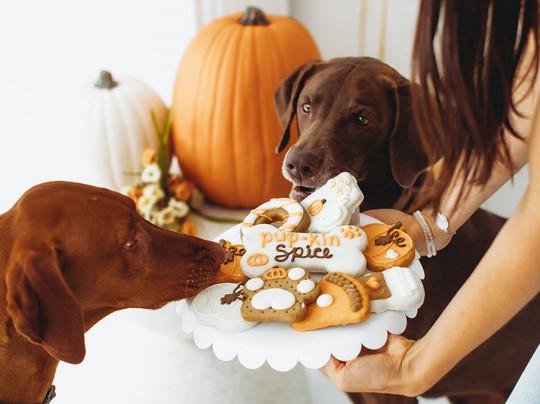 Gâteries pour chiens à la citrouille (3 ingrédients seulement!)
