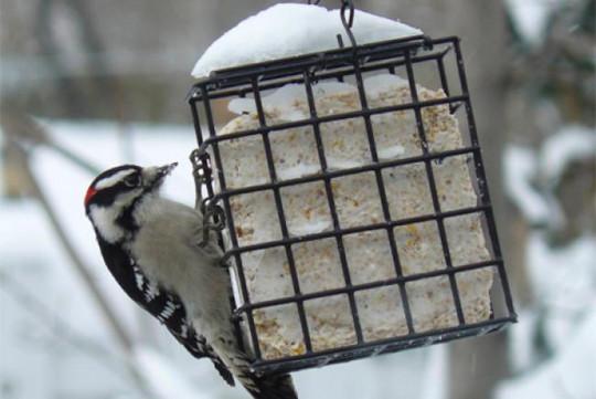 Un suif au beurre d'arachides facile à faire pour nourir les oiseaux!