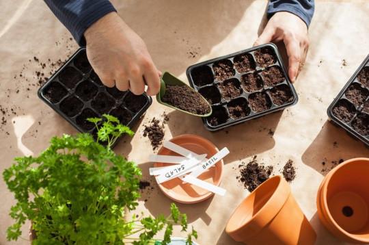 Préparez votre jardin avec ce calendrier de semis simple à suivre